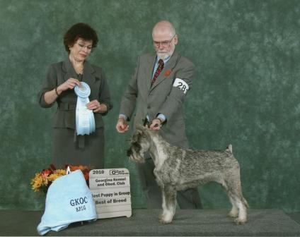 This is Izzy winning Best of Breed and best puppy in Group at the last GKOC show in Sutton .