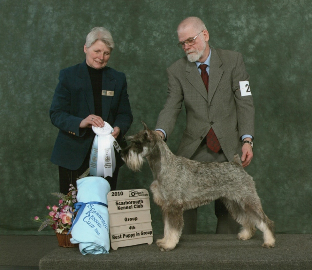This is a picture of Sophie winning a grp 4th and Best Puppy in Group at Scarborough.