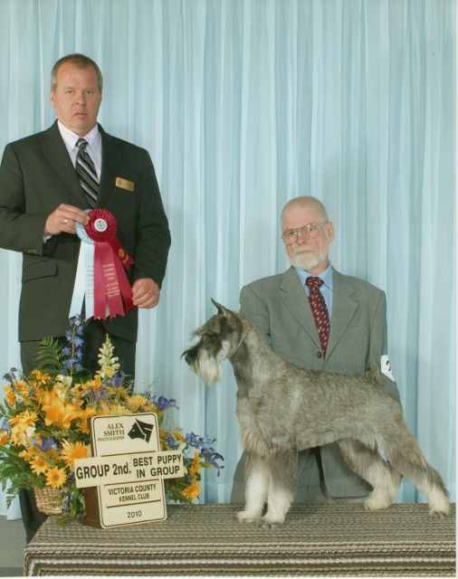 This is Sophie at Victoria County Kennel Club on May 2, 2010 winning a Group 2nd and a Puppy Group