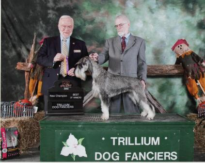 This is Pilot winning Best of Winners to become a new Champion at Trillium Dog Show .